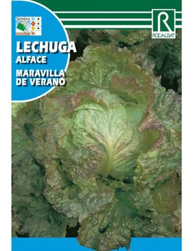 ROCALBA SEMILLAS LECHUGA MARAVILLA DE...