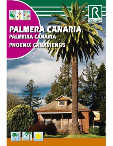 ROCALBA PALMERA CANARIA