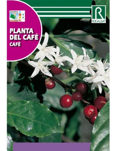 ROCALBA SEMILLAS PLANTA DEL CAFE