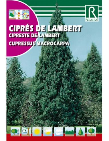 ROCALBA SEMILLAS CIPRÉS LAMBERT