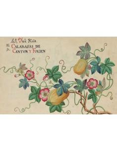 Postal Botánico Asia 1