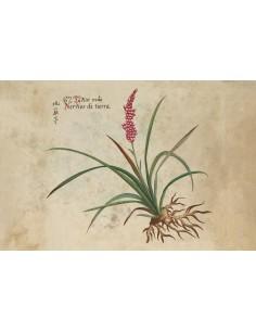 Postal Botánico Asia 8