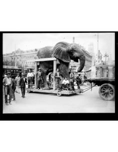Traslado del elefante...