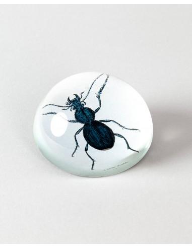 Pisapapeles escarabajo