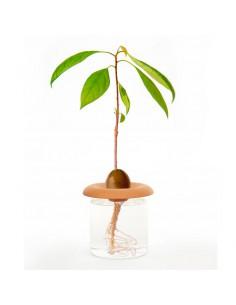 Brotadores de semillas de...