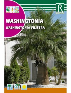 ROCALBA SEMILLAS WASHINGTONIA