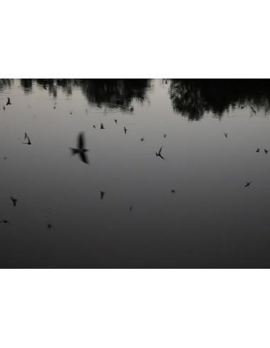 Ciclo Cómo Ser Fotógrafa. Parte IV:...