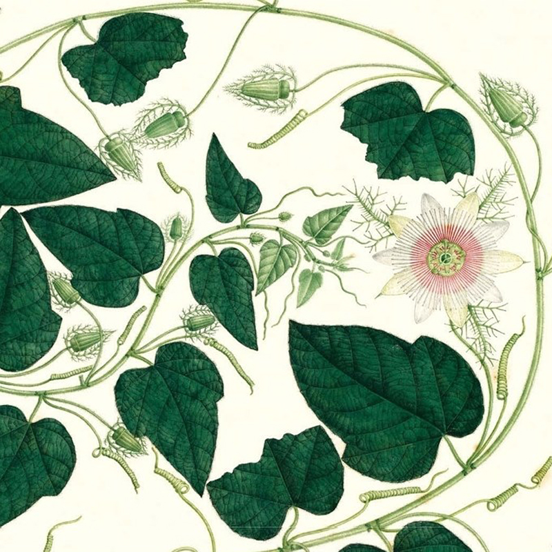 Calendario Real JArdín Botánico